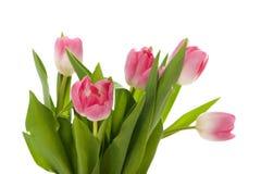 Blumenstrauß der rosafarbenen Tulpen Lizenzfreies Stockbild