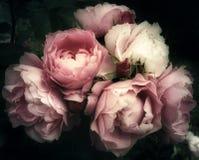 Blumenstrauß der Rosarose blüht auf einem dunklen Hintergrund Stockbild