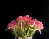 Blumenstrauß der Rose färbte Tulpen mit schwarzem Hintergrund Lizenzfreies Stockbild