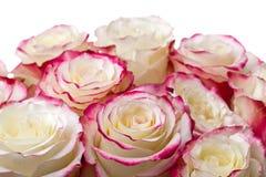 Blumenstrauß der Rosen auf weißem Hintergrund Stockfoto