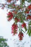 Blumenstrauß der roten Blumen stockbilder