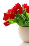Blumenstrauß der roten frischen Frühlingstulpeblumen Stockfotos