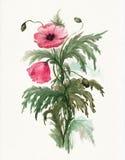 Blumenstrauß der roten Mohnblumen Stockbild