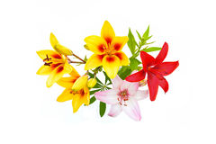 Blumenstrauß der roten, rosa und gelben Lilie auf weißem Hintergrund Lizenzfreie Stockbilder