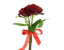 Blumenstrauß der roten Rosen Stockfoto