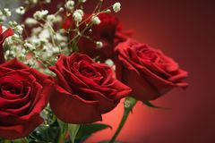 Blumenstrauß der roten Rosen. Lizenzfreie Stockfotos