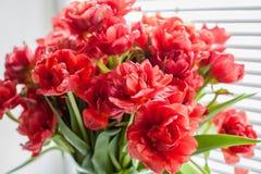 Blumenstrauß der roten Tulpennahaufnahme auf dem Fenster Stockbild