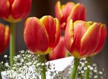 Blumenstrauß der roten u. gelben Tulpe-Gruß-Karte Stockfoto
