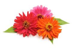 Blumenstrauß der schönen Blumen Lizenzfreies Stockbild