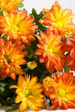 Blumenstrauß der schönen, orange Chrysantheme Stockbilder