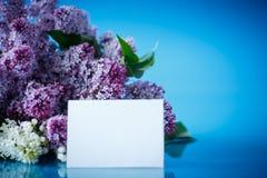 Blumenstrauß der schönen purpurroten Flieder Stockfotos