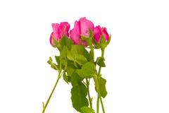 Blumenstrauß der schönen Rosarose Stockbild
