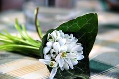 Schöner Blumenstrauß von Snowdrops Lizenzfreie Stockfotografie