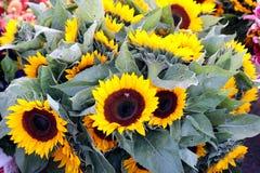 Blumenstrauß der Sonnenblumen Stockfotografie