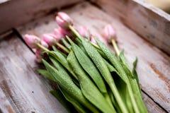 Blumenstrauß der Tulpe Stockbilder