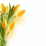 Blumenstrauß der Tulpen lizenzfreie stockfotos