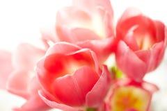 Blumenstrauß der Tulpen Lizenzfreies Stockbild