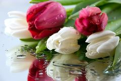 Blumenstrauß der Tulpen lizenzfreie stockbilder