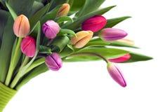 Blumenstrauß der Tulpen lizenzfreies stockfoto