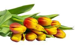 Blumenstrauß der Tulpen lokalisiert auf Weiß Lizenzfreies Stockbild