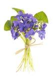 Blumenstrauß der Veilchen Stockbild