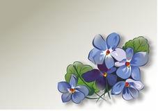 Blumenstrauß der Veilchen Stockfoto