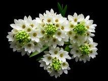 Blumenstrauß der weißen Blumen Stockfotos