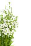 Blumenstrauß der weißen Glocken Stockbilder