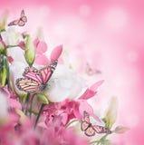Blumenstrauß der weißen und rosafarbenen Rosen Stockfotos
