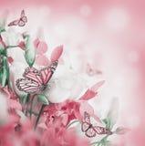 Blumenstrauß der weißen und rosafarbenen Rosen lizenzfreie stockfotografie