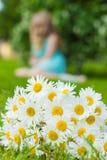 Blumenstrauß der Wiese der weißen Gänseblümchen liegt auf grünem Gras Stockfoto
