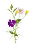 Blumenstrauß der wilden Blumen des Feldes, Ostern-Farben, lokalisiert lizenzfreie stockfotos