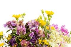 Blumenstrauß der wilden Blumen getrennt Lizenzfreie Stockbilder