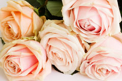 Blumenstrauß der zarten Rosen Lizenzfreies Stockfoto