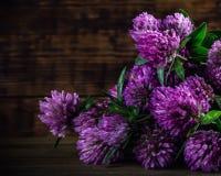 Blumenstrauß des blühenden Klees auf dem hölzernen Hintergrund Stockfoto