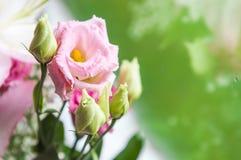 Blumenstrauß des Eustomarosas blüht auf grünem Hintergrund Stockfotos