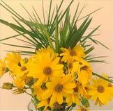 Blumenstrauß des gelben Gänseblümchens stockfotografie