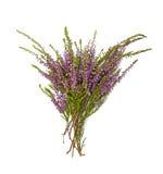 Blumenstrauß des Heidekrauts stockfoto