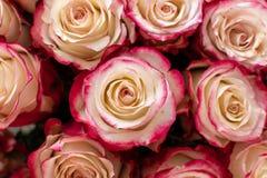 Blumenstrauß des Hochzeitsgeschenks der roten Rosen stockbild