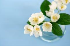 Blumenstrauß des Jasmins auf hellblauem Hintergrund stockfotografie