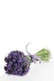 Blumenstrauß des Lavendelblumenschnittes Lizenzfreies Stockfoto