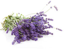 Blumenstrauß des plucket Lavendels Stockbilder
