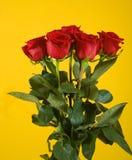 Blumenstrauß des Scharlachrots Rose Lizenzfreies Stockbild