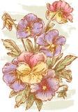 Blumenstrauß des Stiefmütterchens Stockbild