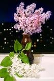 Blumenstrauß einer Flieder Stockfoto