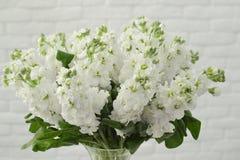 Blumenstrauß eines Frühling mattiola lizenzfreies stockbild