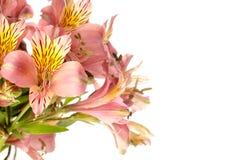 Blumenstrauß eines schönen Alstroemeria blüht auf weißem Hintergrund Stockbilder
