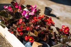 Blumenstrauß für das Pflanzen lizenzfreie stockbilder