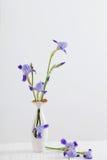 Blumenstrauß Frühling purpurroter Iris im Vase auf Weiß Lizenzfreie Stockfotografie