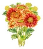 Blumenstrauß mit Aquarell Gerberablume Stockbild